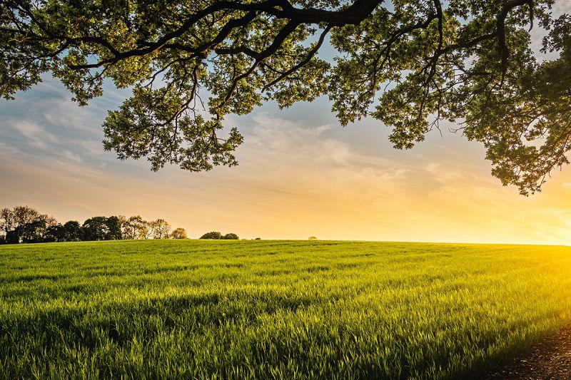 2 belangrijke tips tegen zomerse droogte op boerderij